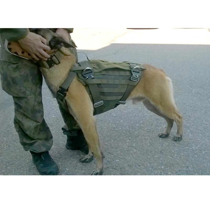 Protección Canina